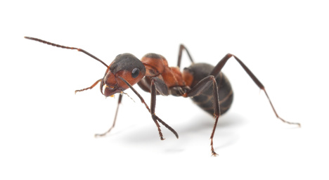 Image of a ant